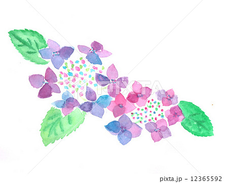 あじさい アジサイ 紫陽花 花 植物 初夏 六月 6月 梅雨 水彩 カラフル