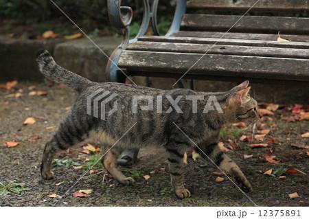 生き物 ペット 自由猫、縄張り巡回中にライバルを見つけて固まる 12375891