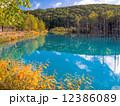 青い池 12386089