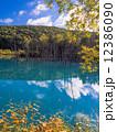 青い池 12386090