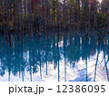 青い池 12386095