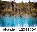 青い池 12386096