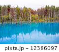 青い池 12386097