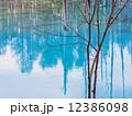 青い池 12386098