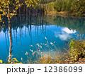 青い池 12386099