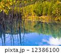 青い池 12386100
