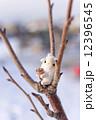 年賀素材 年賀状素材 未年の写真 12396545