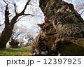 猫 12397925