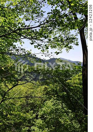 青梅市御岳山からの展望 12423206