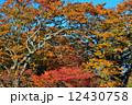 木 秋 紅葉の写真 12430758