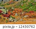草紅葉 栗駒山 栗駒山麓の写真 12430762