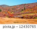 草紅葉 栗駒山 栗駒山麓の写真 12430765