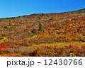 草紅葉 栗駒山 栗駒山麓の写真 12430766