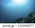 海底 小魚 サンゴの写真 12440077