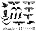 イーグル 鷹 タカのイラスト 12444445