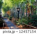 修善寺温泉 竹林の小径 12457154