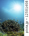 小魚 サンゴ 海中の写真 12501408