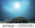 小魚 サンゴ 海中の写真 12501581