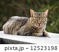 ベンチに座る猫 12523198
