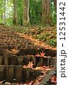 秋の散歩道 12531442