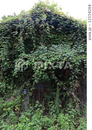 写真素材: 緑に覆われ、朽ちてゆく廃屋