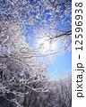 樹氷 冬山 霧氷の写真 12596938