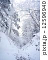冬山 霧氷 真冬の写真 12596940