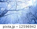 冬山 霧氷 真冬の写真 12596942