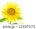 向日葵 12597573