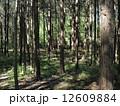 森林008 12609884