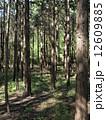 森林009 12609885