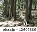 森林010 12609886