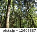 森林011 12609887