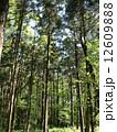 森林012 12609888