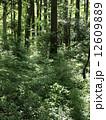 森林013 12609889