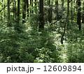 森林014 12609894