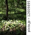 森林015 12609895