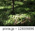 森林016 12609896