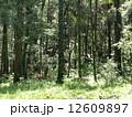 森林017 12609897