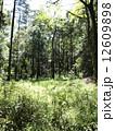森林018 12609898
