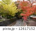 もみじ回廊 秋 紅葉の写真 12617152