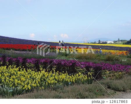 かんのファームの花畑 12617863