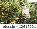 みかん みかん狩り 蜜柑の写真 12619221