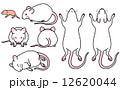 ハツカネズミ-セット(白) 12620044