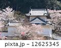 春の出石城 12625345