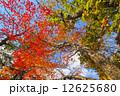 紅葉 木 もみじの写真 12625680