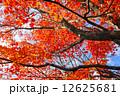 紅葉 木 もみじの写真 12625681