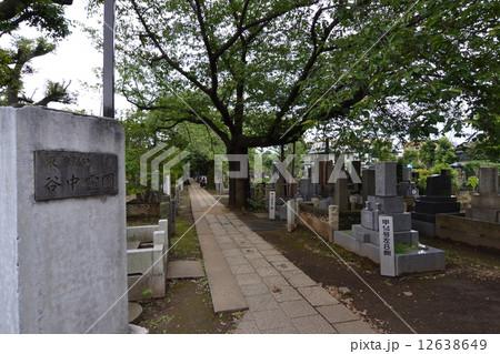 谷中霊園 12638649