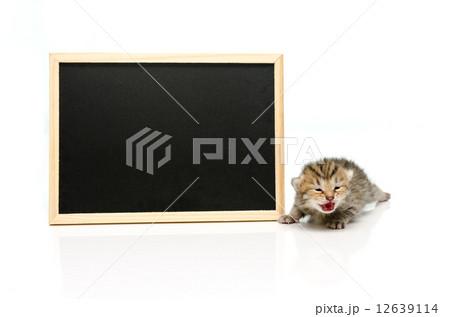 Tabby kitten with black board on white backgroundの写真素材 [12639114] - PIXTA