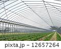野菜畑 ビニールハウス ハウス栽培の写真 12657264